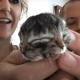 На ферме в Орегоне родился котенок с двумя мордочками
