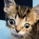 Парень нашел особенного котенка, который стал не только его любимчиком, но и всей сети