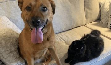 Кот Марвин помогает псу Лосику не бояться шума