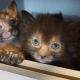 Оборотни нынче дороги — по 2000 евро за котенка!