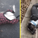 Слепой пес, уставший от карантина, притворяется на улице ушедшим в мир иной