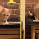 Людей испугала кошка, которая случайно сыграла на пианино