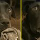 Реакция пса на новость про будущее отцовство развеселила соцсети