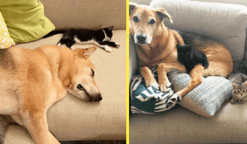 Пес, которого женщина спасла от усыпления, стал мамой для ее котят