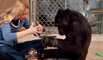 История о горилле, которая «стала человеком»