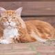 15-килограммовый кот по имени Омар живет в Австралии и кушает мясо кенгуру