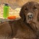 После страшного диагноза, который услышали хозяева пса, они решили организовать ему «самый лучший» год в жизни!