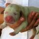 Женщина купила необычного щенка зеленого цвета. Но со временем он изменил окрас