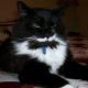 Эмоциональные кошки, которые заслужили свой «Оскар» и не только