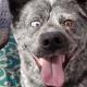 Забавные собаки устраивают приколы в естественной среде обитания
