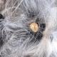 Кот с фантастической внешностью осуждает одним своим взглядом