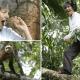 Женщину забыли в лесу на 10 лет. Ей пришлось жить с обезьянами и выучить их язык