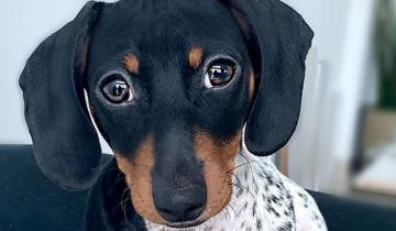 Необычный щенок удивляет пользователей Сети своим необычным окрасом