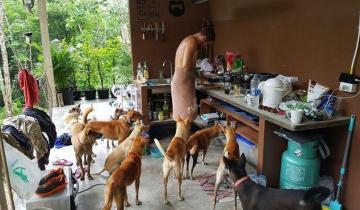 Влюблённая пара приютила 15 бездомных собак, пережив потерю одного, но очень любимого животного