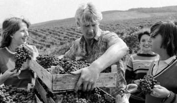 Исторические фотографии: уборка урожая в СССР (17 фото)