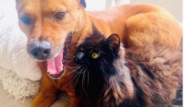 Кот Марвин помогает собаке Мусе переживать слишком шумные вечера