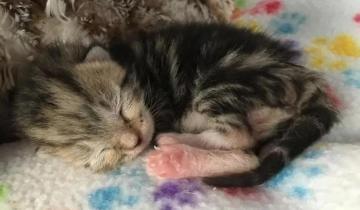 Люди спасли котенка, отдав спасателям, но всё никак не могли его забыть