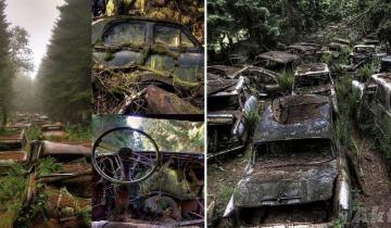 Тайна фотографий лесного кладбища ретро автомобилей в Бельгии