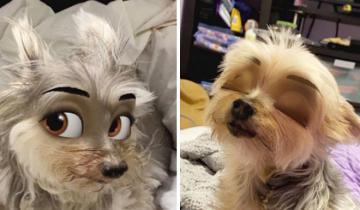Новый фильтр для смартфона превращает собак в мультяшных персонажей