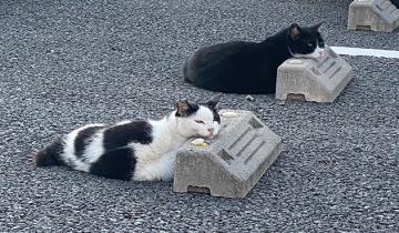 Японские кошки используют парковочные бамперы вместо подушек