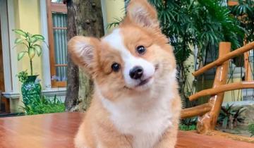 Познакомьтесь с Малышкой — самым очаровательным щенком на свете!