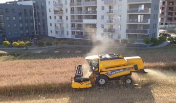 В Польше фермеры не захотели продавать свою землю застройщикам и убирают поля среди новых многоэтажек