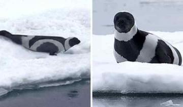 Черно-белые красавицы и красавцы из мира животных