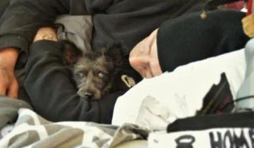 У бездомного украли собаку, но после того как ее нашли, мужчина утратил смысл жизни