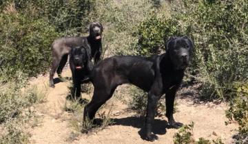 Собаки потерялись в горах и одичали. Их еле спасли