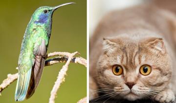 10 удивительных фактов из мира дикой природы, которая не такая уж и дикая