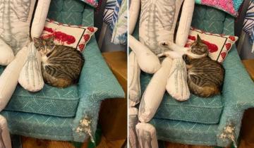 В Сети обсуждают неожиданно обнаруженную странную тягу кошек к человеческим скелетам