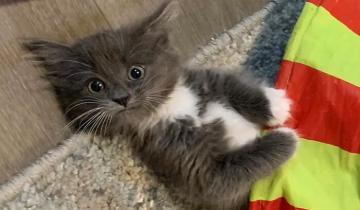 Очаровательная кошечка с неизлечимым недугом нашла свой дом