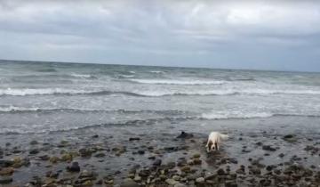 Рыбак пошел на зов своей собаки и оказалось, что не зря