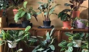 Что делают растения, пока вас нет дома?