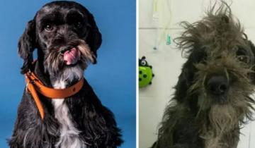 Фото бездомных собак до и после их спасения доказывают, что любовь — великая сила