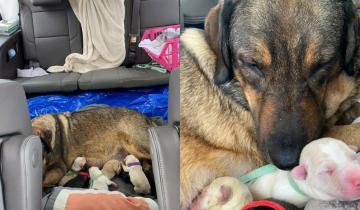 Семья из Техаса 12 часов провела в машине, чтобы собака родила в тепле