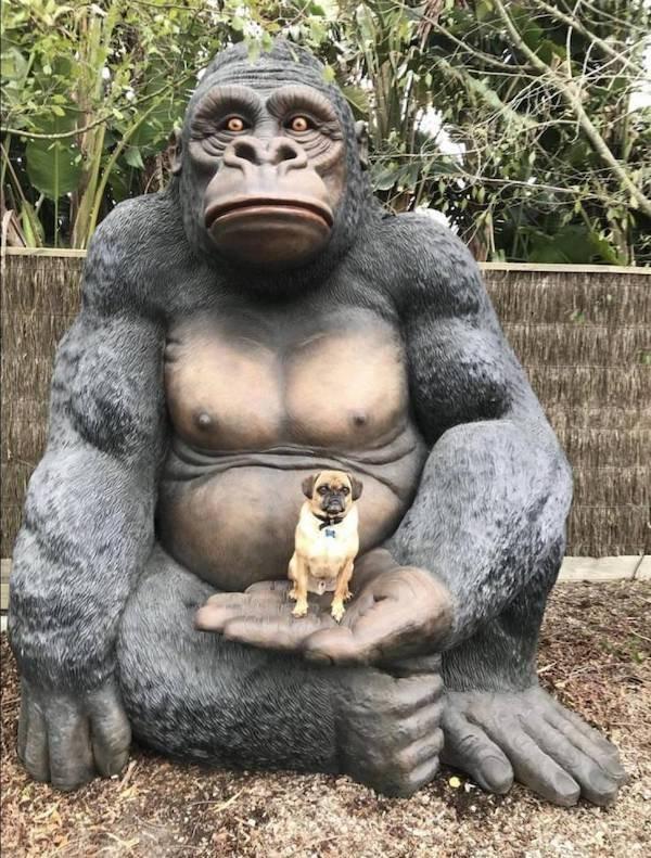 9 фото животных, на которые без смеха не взглянешь
