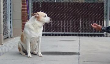 Приютский пёс заплакал, когда узнал стоящего перед ним человека