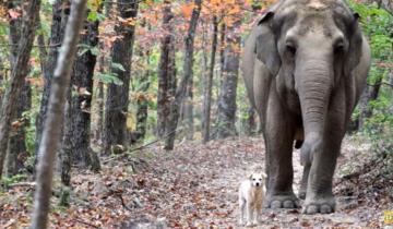 Слониха целый месяц ждала маленького друга на одном месте