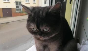 «Грустнокошка» Фасолька наконец-то повстречала свою хозяйку-кошатницу