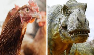 Чудеса природы: сравните современных животных и их далеких предков