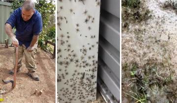В Австралии тысячи змей и пауков ищут убежища в домах жителей