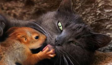 10 трогательных снимков, когда абсолютно разные животные подружились