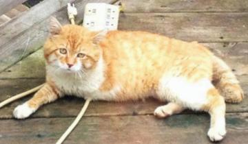 Бездомный трехногий кот приносил счастье людям