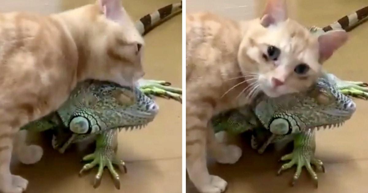 Коты и собаки, которые дружат с другими животными