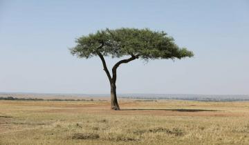 ТОП-5 самых одиноких существ на нашей планете