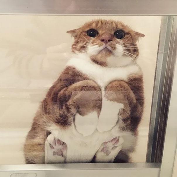 17 лучших фото котиков