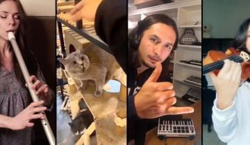 Мяуканье котика музыканты со всего мира превратили в хит сезона