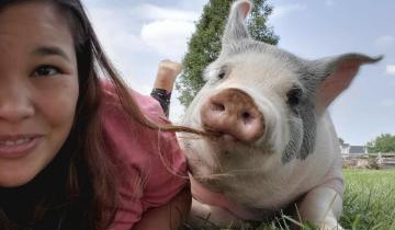 Девушка спасла больного поросенка, и теперь он самый счастливый