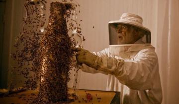 80 000 пчел под руководством художника создают произведения искусства